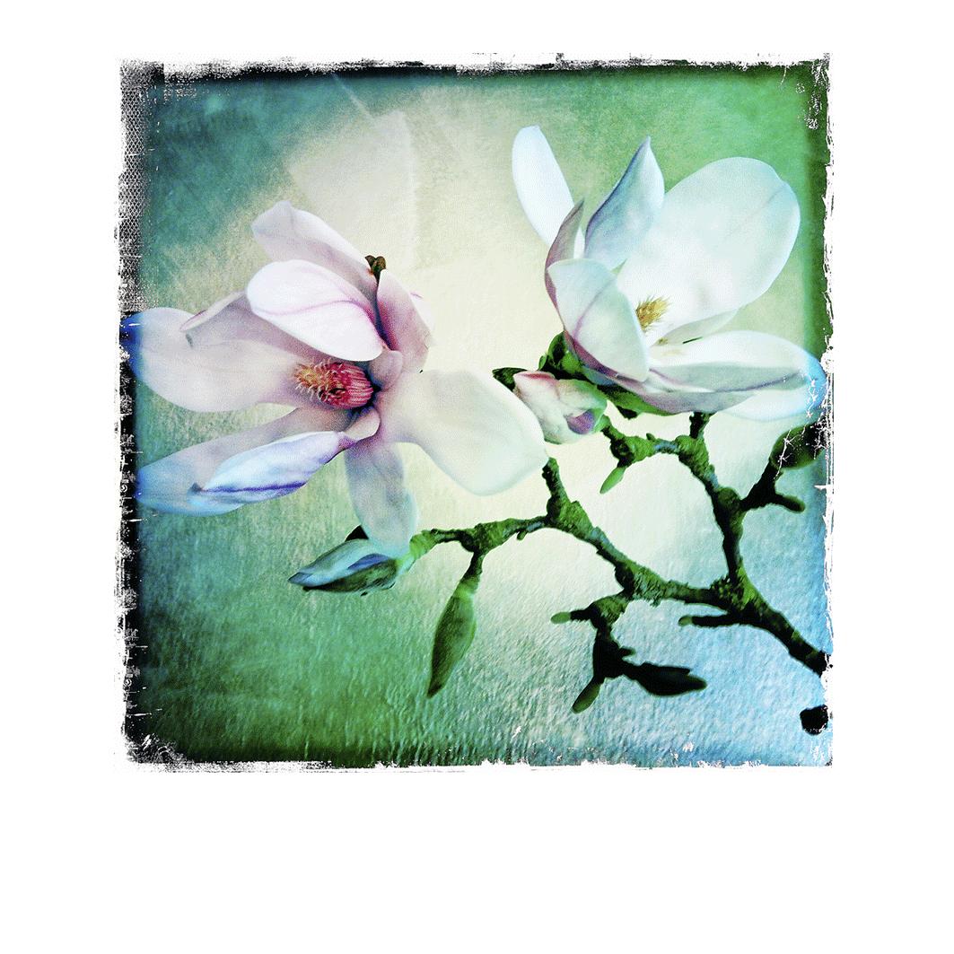 Le Magnolia 3