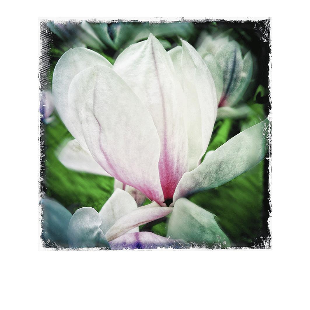 Le Magnolia 4