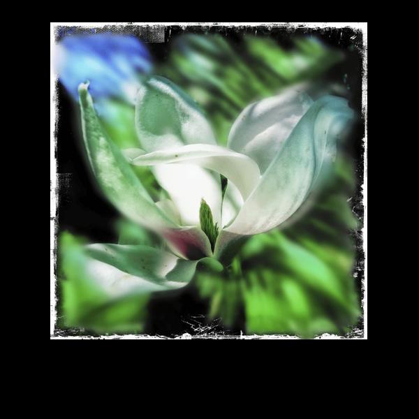 Le Magnolia 5