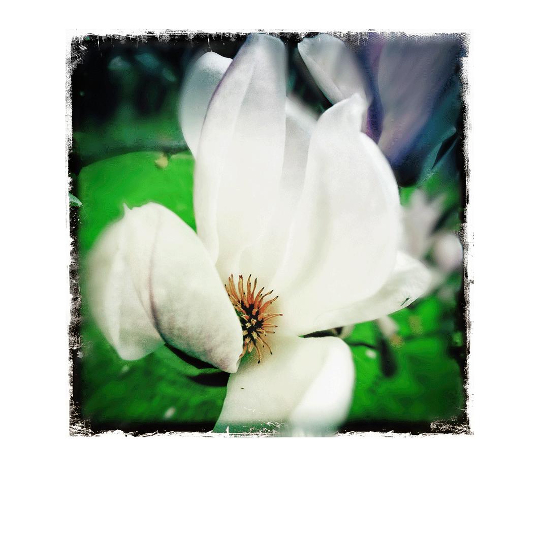 Le Magnolia 6